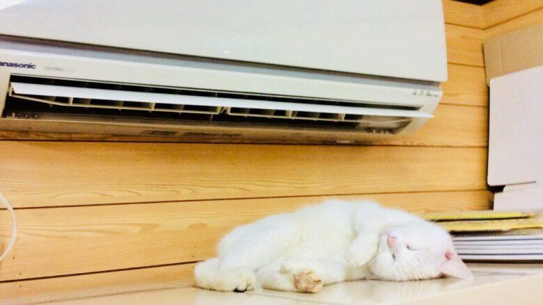 エアコン前でくつろぐ猫
