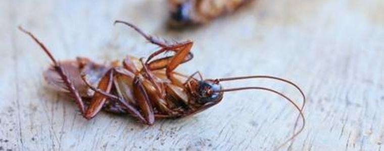 ゴキブリあおむけ